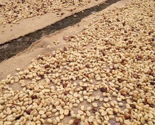 Vrste Kave