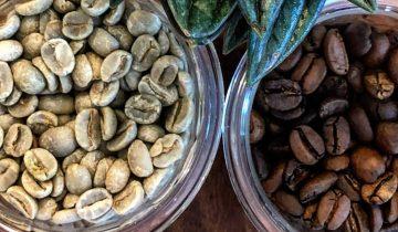 Zakaj Specialty kava?/ Why Specialty Coffee?