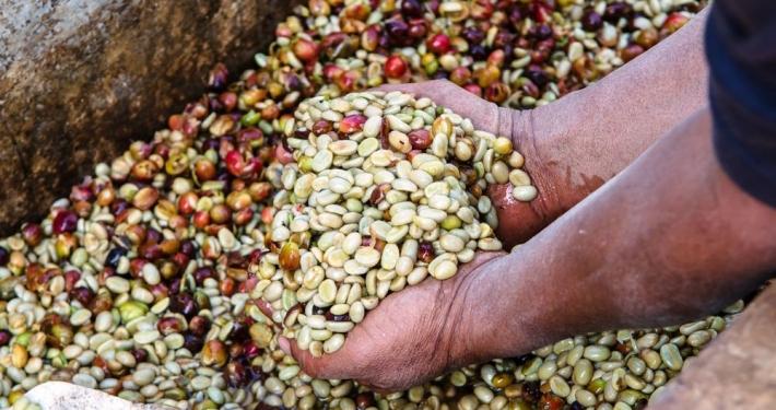 mokro procesirana kava